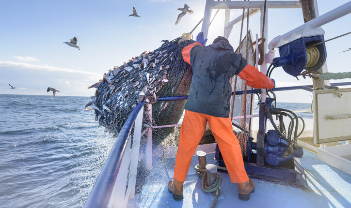 UK-announces-24-million-for-cutting-edge-science-and-fisheries.jpg